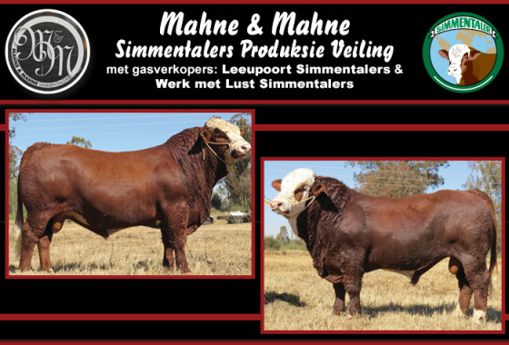 MAHNE & MAHNE SIMMENTALER VEILING 2015