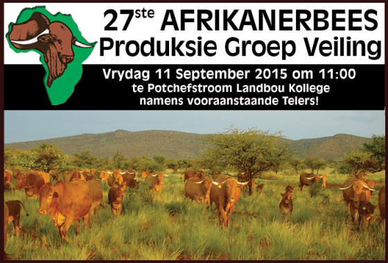 AFRIKANERBEES PROD VEILING 2015