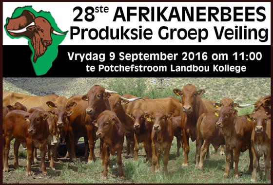 AFRIKANERBEES PROD VEILING 2016