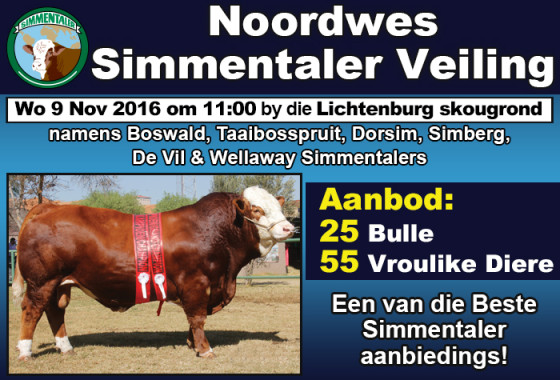noordwes-simmentaler-veiling