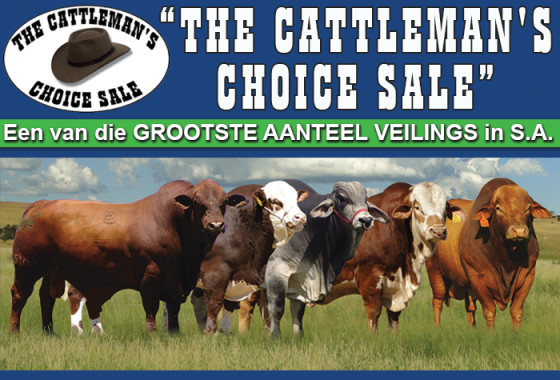 CATTLEMANS CHOICE SALE WEB